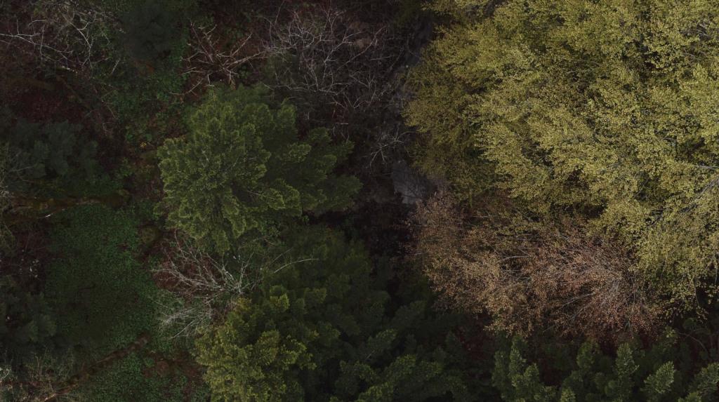 Fühl den Wald