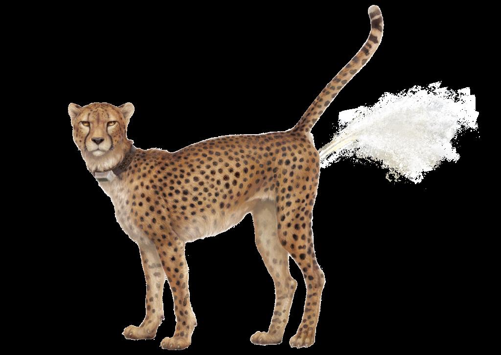 Dufte Katzenbars