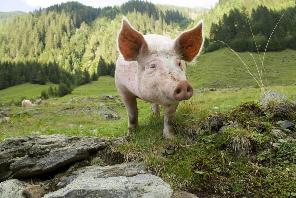 Luxemburg verankert Tierwürde im Gesetz