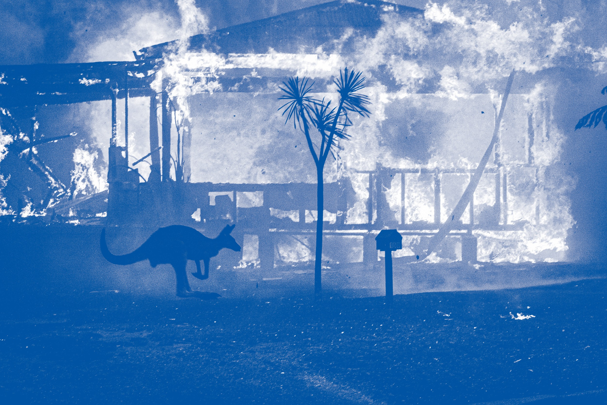 WÜTENDE FLAMMEN In den Feuersbrünsten sterben Menschen und Tiere
