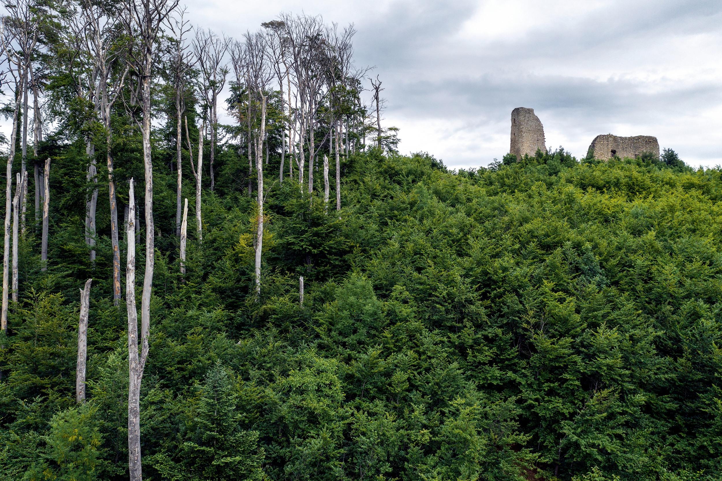 STEHEND K.O. Ausgetrockneter Buchenbestand auf dem Schönberg bei Freiburg. Förster und Naturschützer waren überrascht, dass die Dürrejahre 2018 und 2019 auch so vielen Laubbäumen den Garaus machten, die als vergleichsweise klimastabil gelten. Allerdings besteht der Boden hier aus Muschelkalk, in dem der Regen schnell versickert