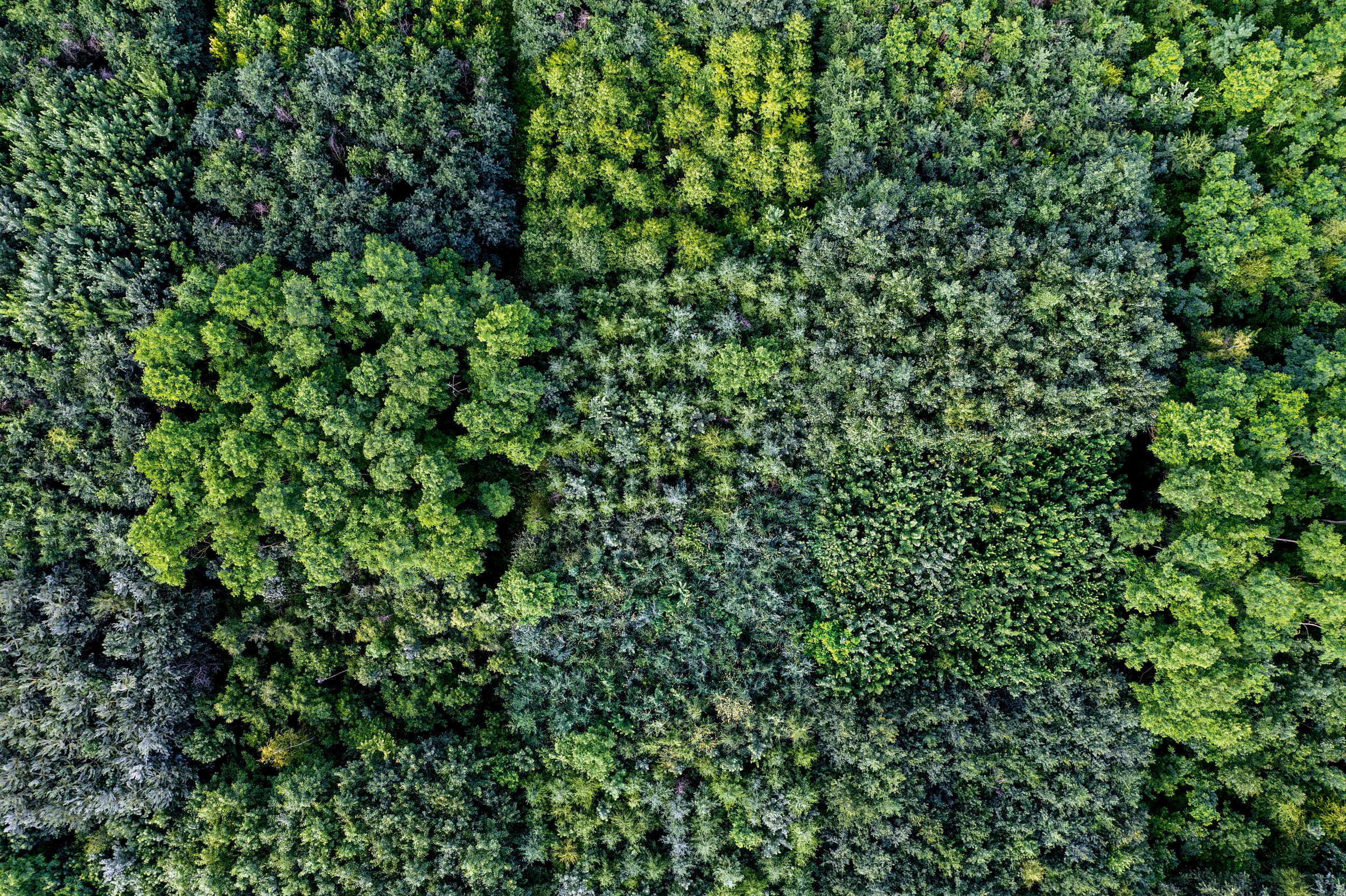 """BAUM-CASTING 14 Baumarten – darunter Esskastanie, Douglasie und fünf verschiedene Eichenarten – sollen hier auf 20 mal 25 Meter großen """"Plots"""" ihre Klimafitness unter Beweis stellen. Der Superbaum ist noch nicht gefunden"""