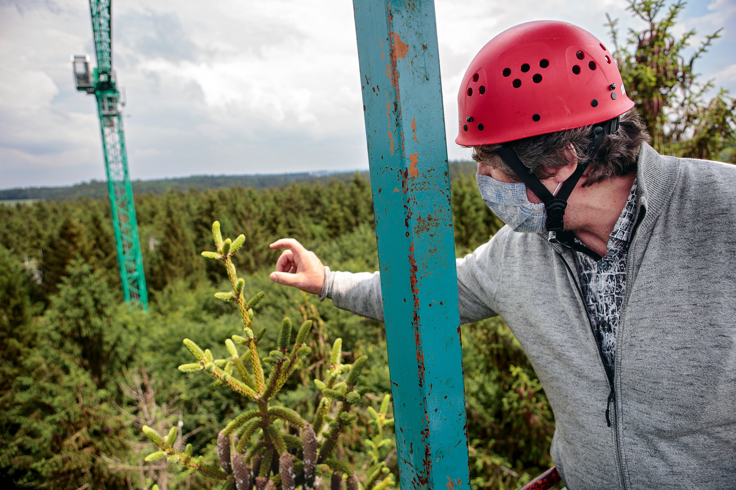<p>ÜBER ALLEN WIPFELN<br /> Am Wuchs der Jahrestriebe an den Baumspitzen kann Biologe Thorsten Grams die Auswirkungen einer künstlich herbeigeführten Dürre erkennen</p>
