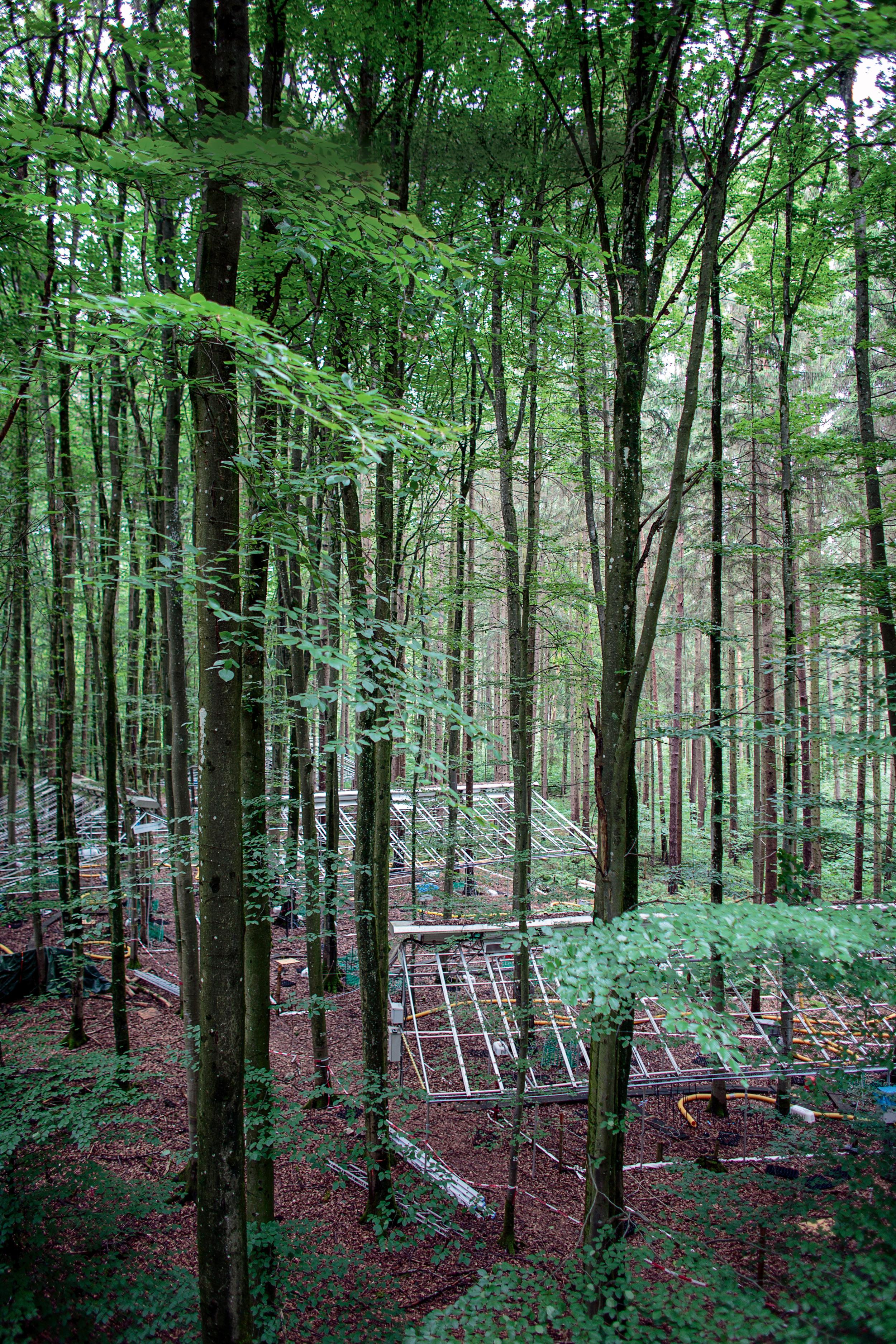 MÖBLIERTER MISCHWALD Fünf Jahre lang haben raffinierte Dachkonstruktionen im Kranzberger Forst den Regen vom Waldboden ferngehalten. Das diente der wissenschaftlichen Erkenntnis. Nun dürfen sich die Bäume erstmal wieder erholen