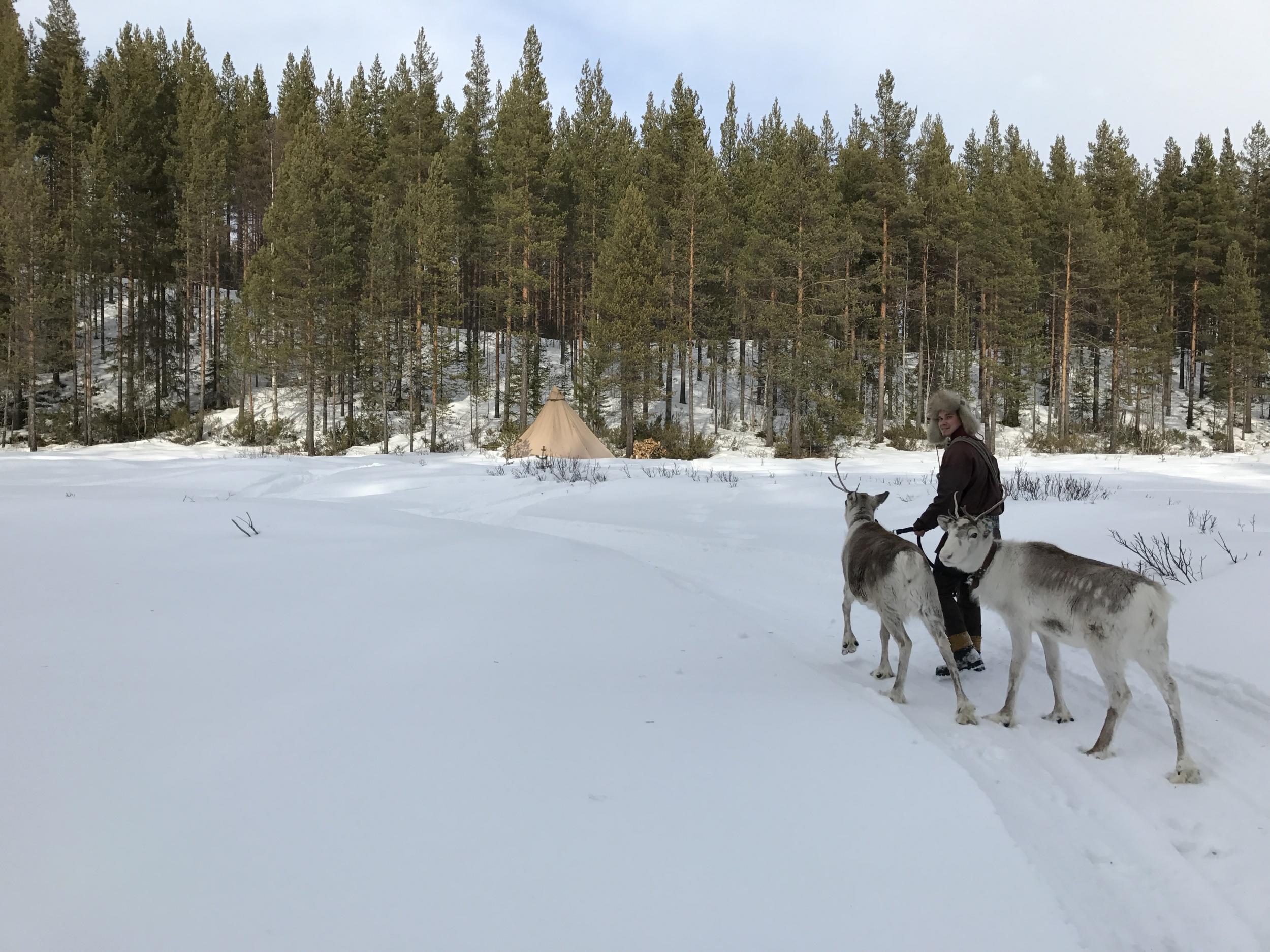 Viele Sámi leben von der Rentierzucht – wie Jon-Krista Jonsson und seine Familie. Das halbe Jahr über ziehen sie mit ihrem Zelt der Herde hinterher.