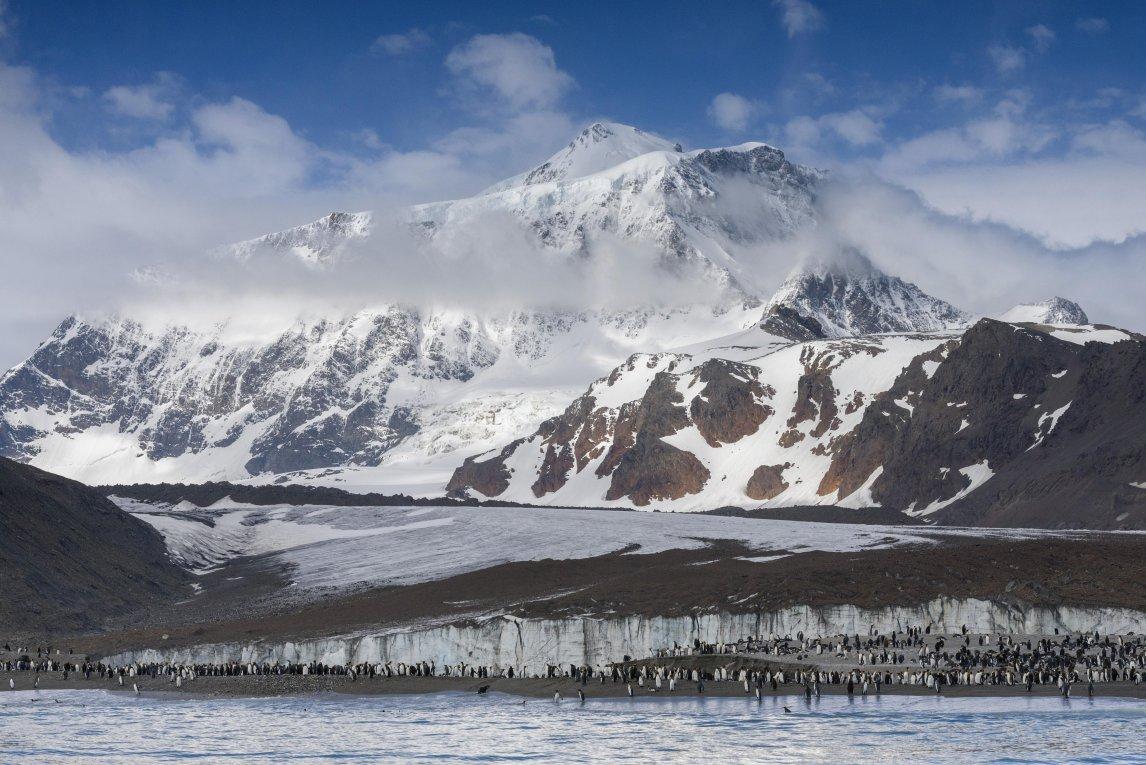 <p>Südgeorgien ist beliebt bei Pinguinen, rund die Hälfte der weltweit lebenden Königspinguine bewohnt die Insel. Hier tummeln sie sich in der Saint Andrews Bay an der Nordküste</p>