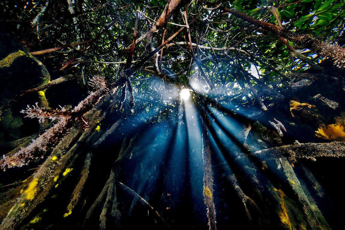 WURZELGEFLECHTNur gelegentlich fällt Licht durchs dichte Blätterdach