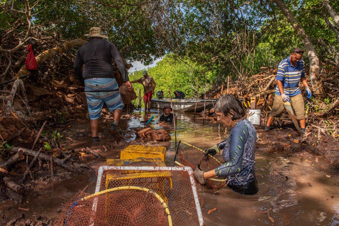 <p>MATSCH UND MOSKITOSMeeresbiologin Sabine Engel (vorn) und ihr Team räumen mit Sägen, Netzen und Schaufeln die natürlichen Abflüsse, sodass frisches Meerwasser in den Wald fließen kann</p>