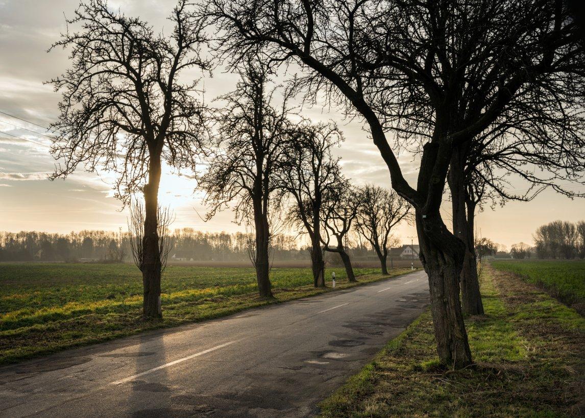 <p>Vorwärts und nie zurück: Die Straßen rund um Klein Jasedow verbinden die Reize der Vergangenheit mit den Visionen für die Zukunft</p>
