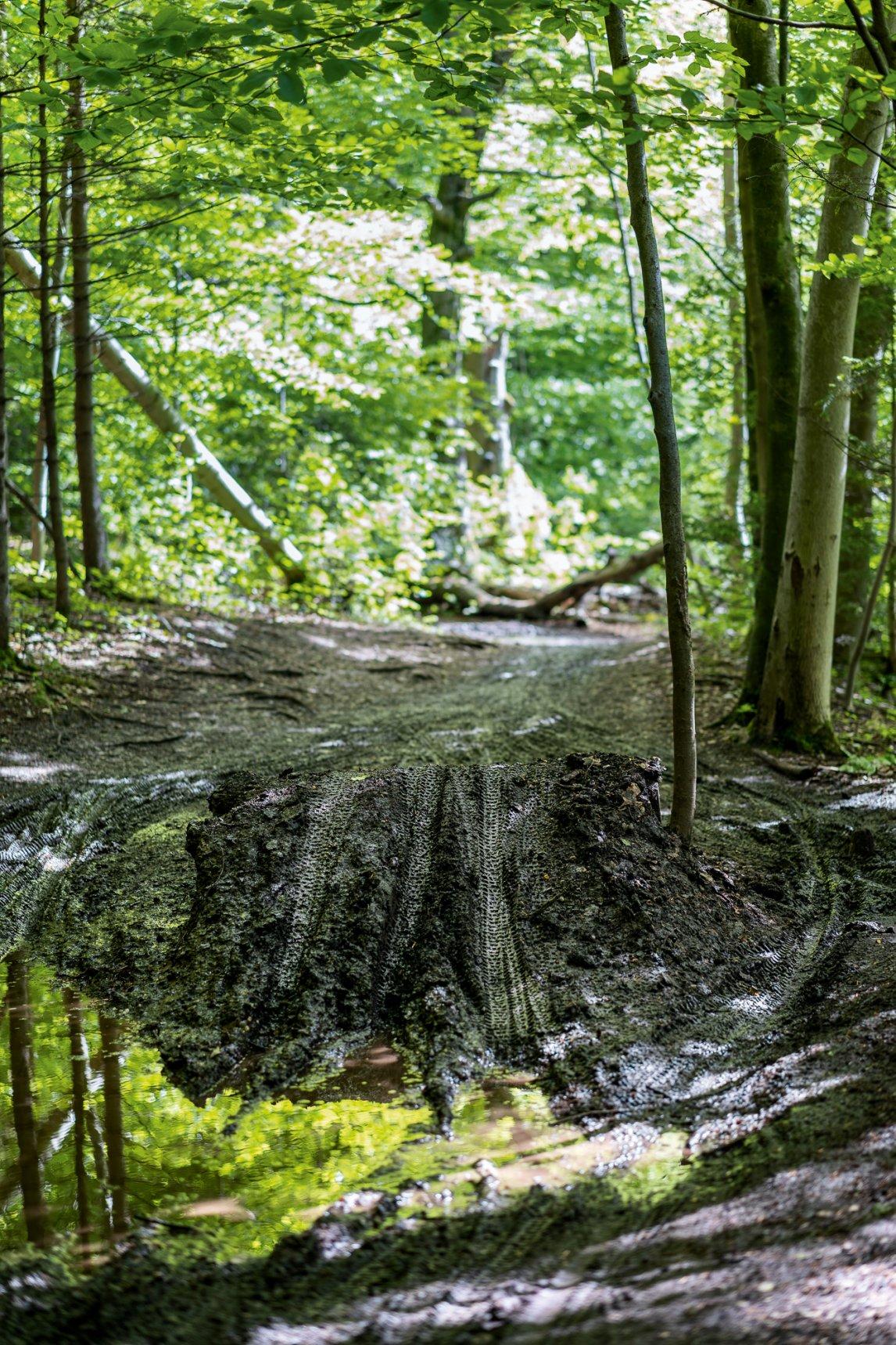 """<p class=""""text-align-center"""">ÜBER STOCK UND STEIN<br /> Reifenspuren zeugen vom Radverkehr im Wald</p>"""