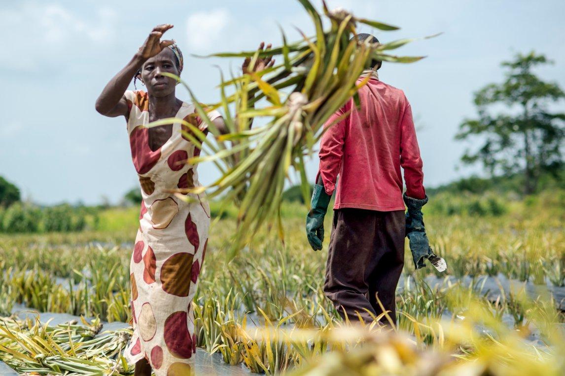 SYNERGIEN In vielen Ländern haben Frauen schlechte Chancen, Land zu besitzen oder zu erben. Da sie auch weniger Zugang zu Bildung, Technologie und Krediten haben, erwirtschaften sie oft geringere Erträge. Hier ließen sich drei Krisen mit einer Klappe schlagen: die Gleichberechtigung vorantreiben, zugleich Hunger und den Flächenbedarf der Landwirtschaft verringern und damit wiederum das Klima schützen